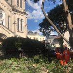 Nota de Esclarecimento sobre a poda e retirada de árvores